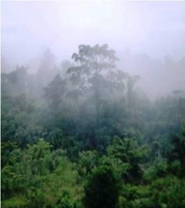 Hutan Papua sebelum disentu oleh tangan2 yang tidak bertanggung jawab