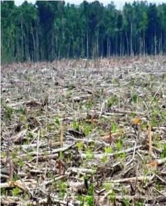 kondisi kekayaan alam Papua yang sedang di rusak